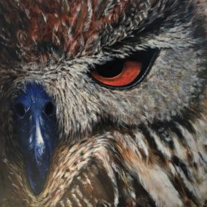 A portion of an owl's face